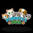 Гральний автомат Purrfect Pets